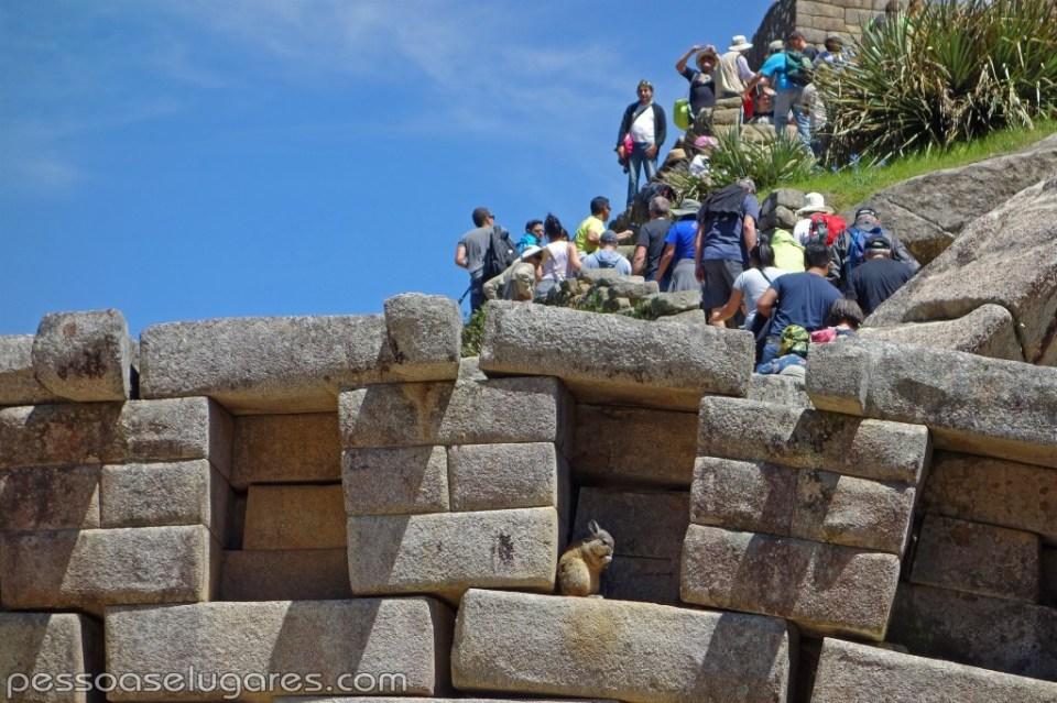Peru - 05-06-07-08 - 11-2014 (286) cópia