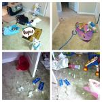 Dog home alone. Dog destroys apartment.