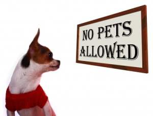 You are more than welcome here, but your pet has got to go!