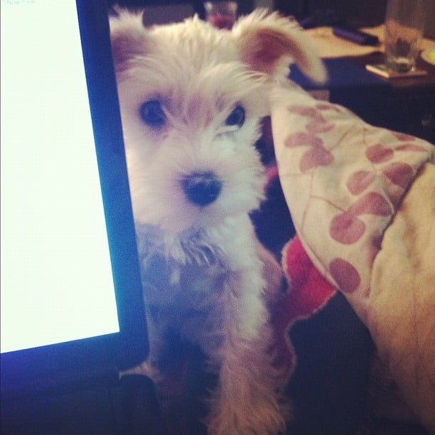 SheKnows.com 5 Pet bloggers you need to know about