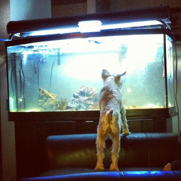 Blog Paws Blog Hop: Wordless Wednesday – Fishies!