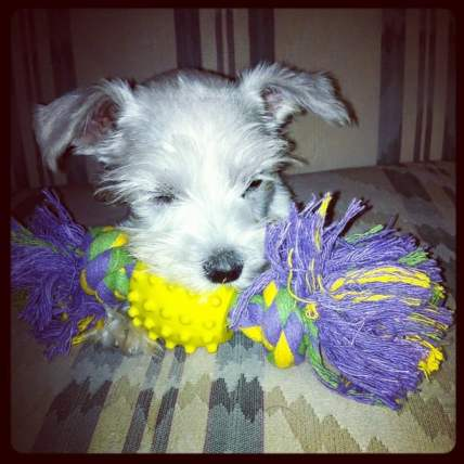 first puppy toy