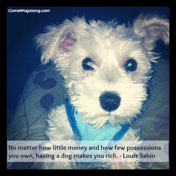 """No matter how little money and how few possessions you own, having a dog makes you rich"" - Louis Sabin"