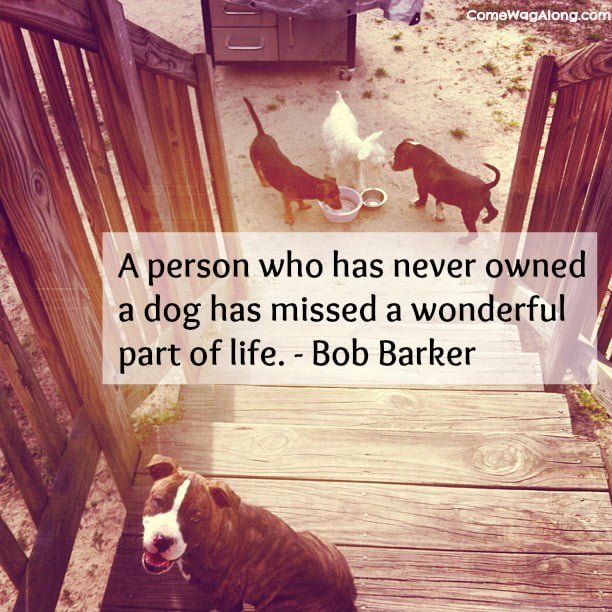 """A person who has never owned a dog has missed a wonderful part of life."" - Bob Barker."