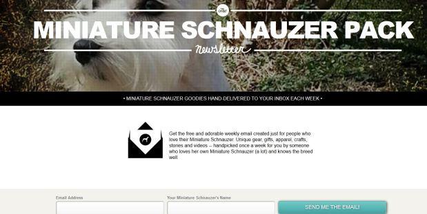 miniature schnauzer informationn