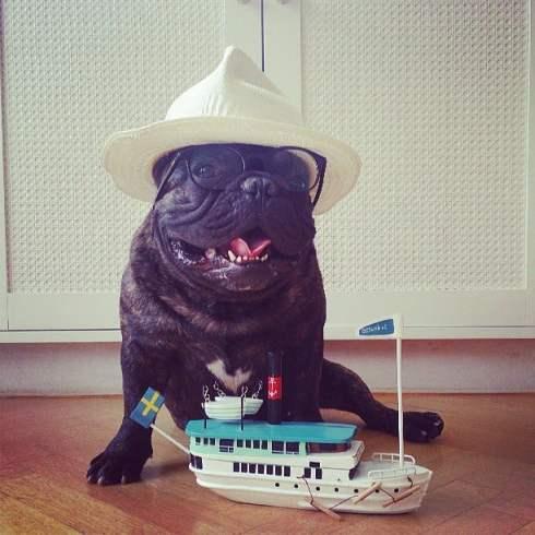 Boss The French Bulldog Boat