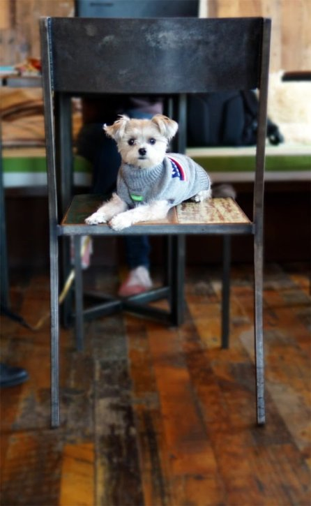 Minnie In Manhattan - dog clothes