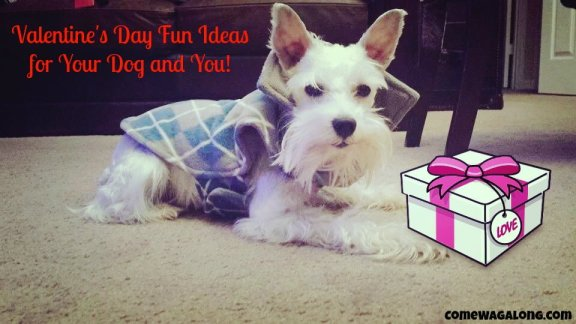 Valentines Day Gift Ideas for Dogs