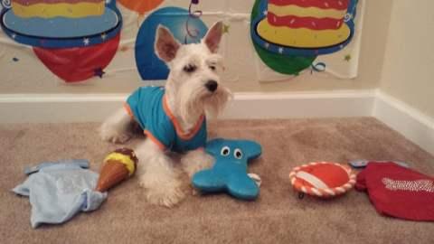 Simba Birthday - - Dog Birthday Gifts