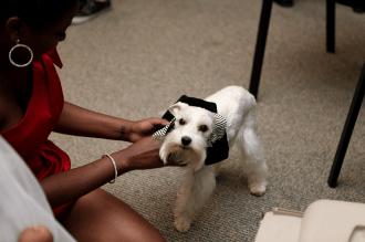 dog getting ready for wedding
