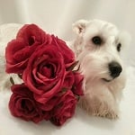 BlogPaws Blog Hop: Wordless Wednesday – A Gift for You!