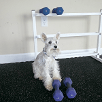 BlogPaws Blog Hop: Wordless Wednesday – Working Out!