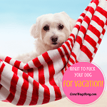 What to Pack for Your Dog When Going on Vacation