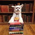 Fashion Friday: Gizzy The New York Dog