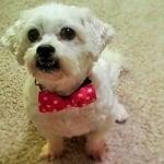 Fashion Friday: Riley-Poo the Peekapoo