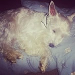 BlogPaws Blog Hop: Wordless Wednesday – Pillow Thief