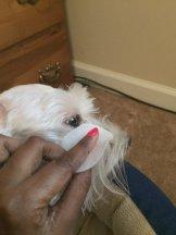 Viva La Dog Spa Dog Facial Wipes Step 1