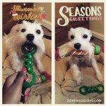 BlogPaws Blog Hop: Wordless Wednesday – Holiday Cheer