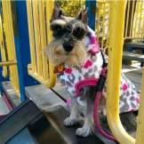Sitting pretty at the playground.