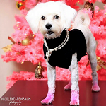 Fashion Friday: Sparkle the Posh Pup
