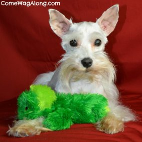 I love plushy soft Kong dog toys!
