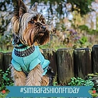 Fashion Friday: Ollie the Yorkie