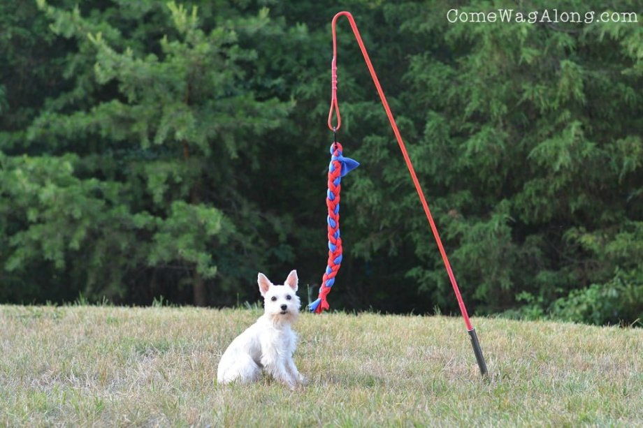 Tether Tug Dog Toy Outside