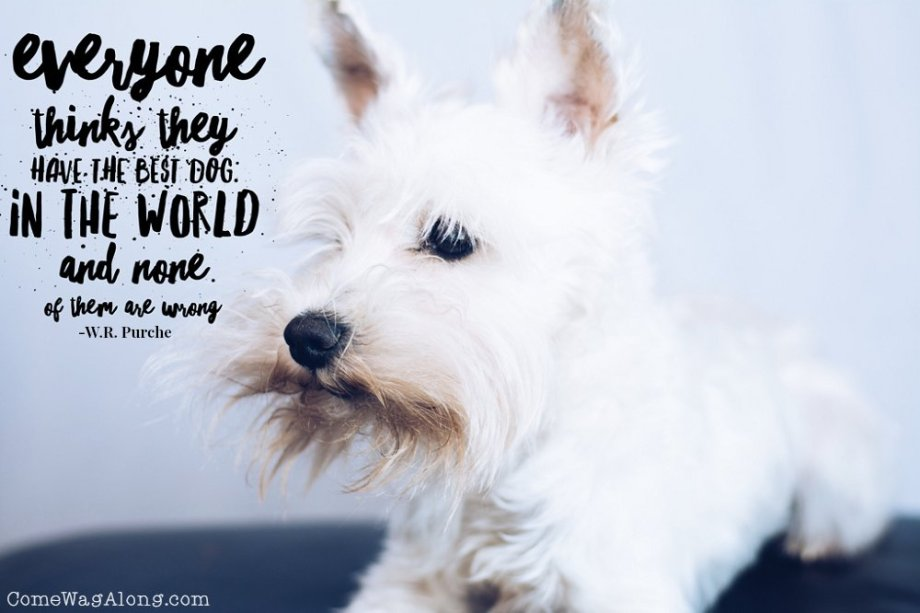 """Everyone thinks they have the best dog in the world and none of them are wrong"" - W.R. Purche - ComeWagAlong.com"