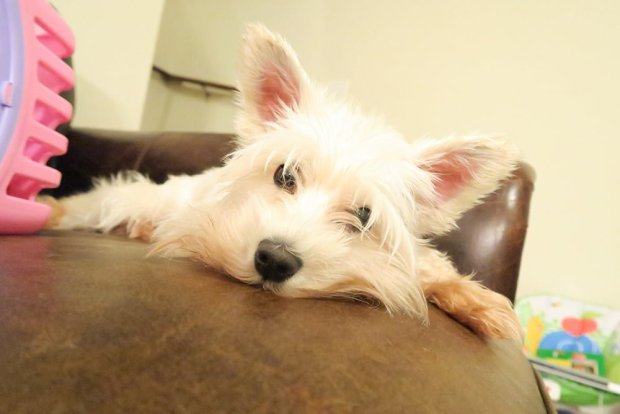 6 Indoor Dog Activities For a Rainy Day
