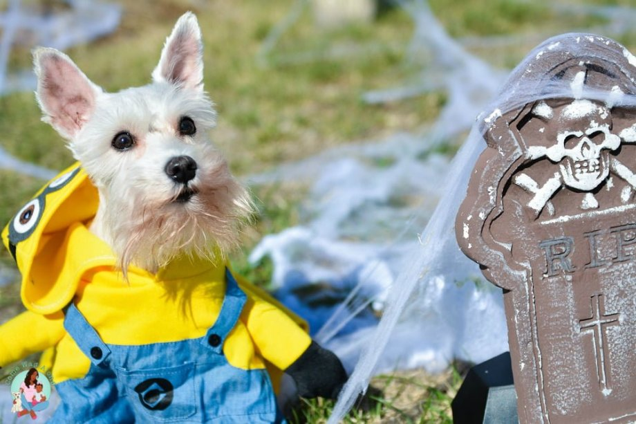 Mini Schnauzer Minion Dog Costume
