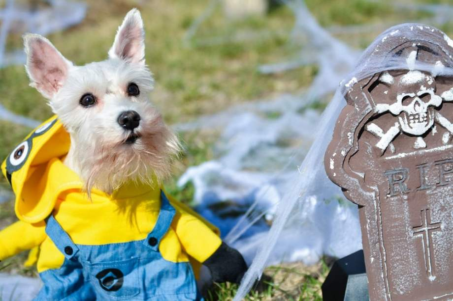 Simba the Mini Minion Dog Costume