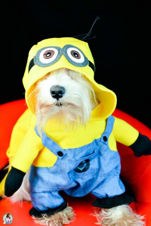 Small Dog Minion Costume