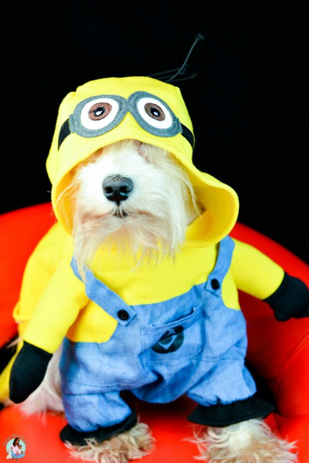 Small Dog Minion Costume