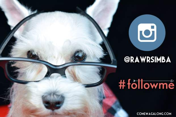 5 Reasons to Follow RawrSimba on Instagram!