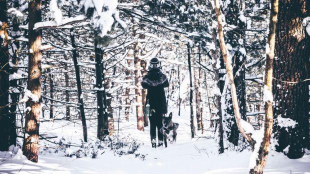 winter pet clothes