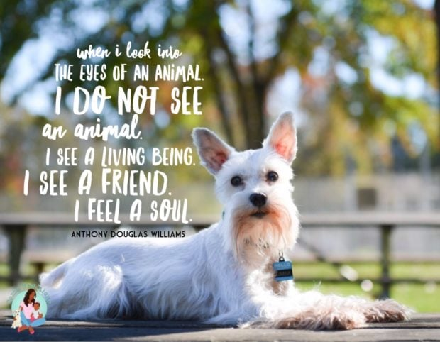 """""""When I look into the eyes of an animal, I do not see an animal. I see a living being. I see a friend. I feel a soul."""" - ComeWagAlong.com"""