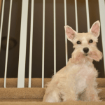 7 Pet Hacks for Dog Owners