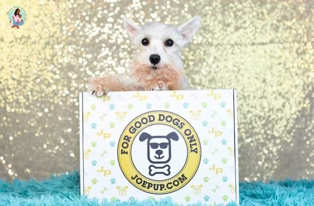 Joe Pup Dog Subscription Box Unboxing - ComeWagAlong.com