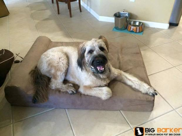 Big Barker Dog Beds - Joint Care for Dogs