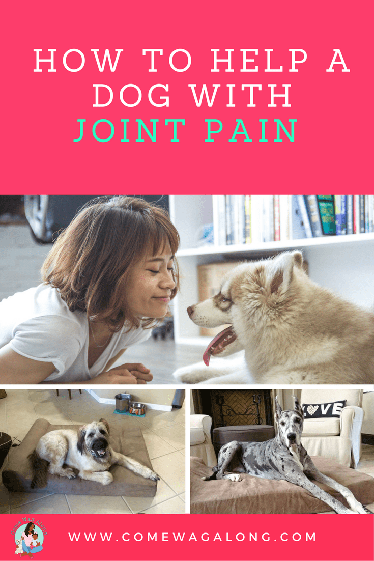 How to Help a Dog with Joint Pain - ComeWagAlong.com