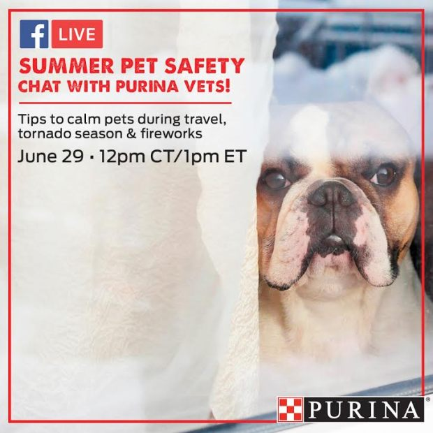 Summer Pet Safety Purina Facebook Live