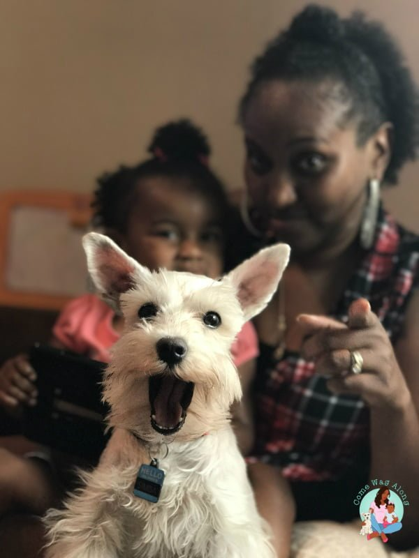 Funny photobomb of dog