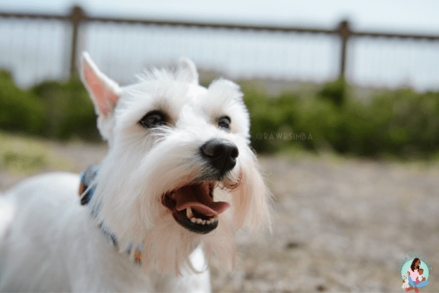 Summer Pet Health Tips