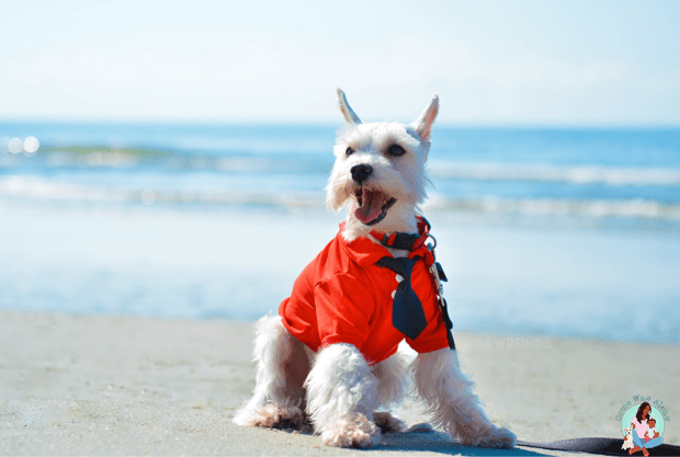 taking your dog to the beach