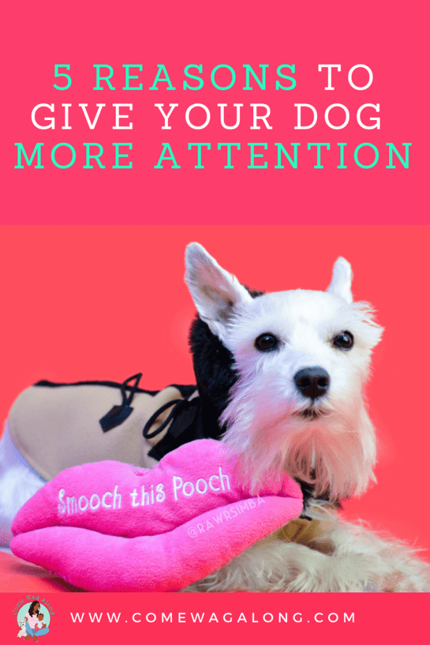 Reasons to give dog more attention