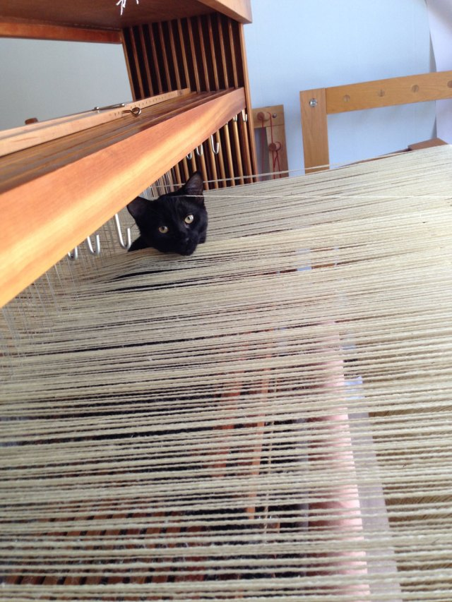 "Many people find that having ""helpers"" with their weaving stressful. My cats help me realize that weaving is a fun and explorative act that can help you find the quiet space. If they get too ""explorative"" or ""helpful"" I tend to give them the boot. But, having them in the studio with me helps me enjoy what I am doing."