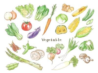 野菜のタンパク質で筋肉をつける