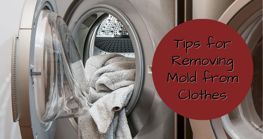 removing mold from clothes