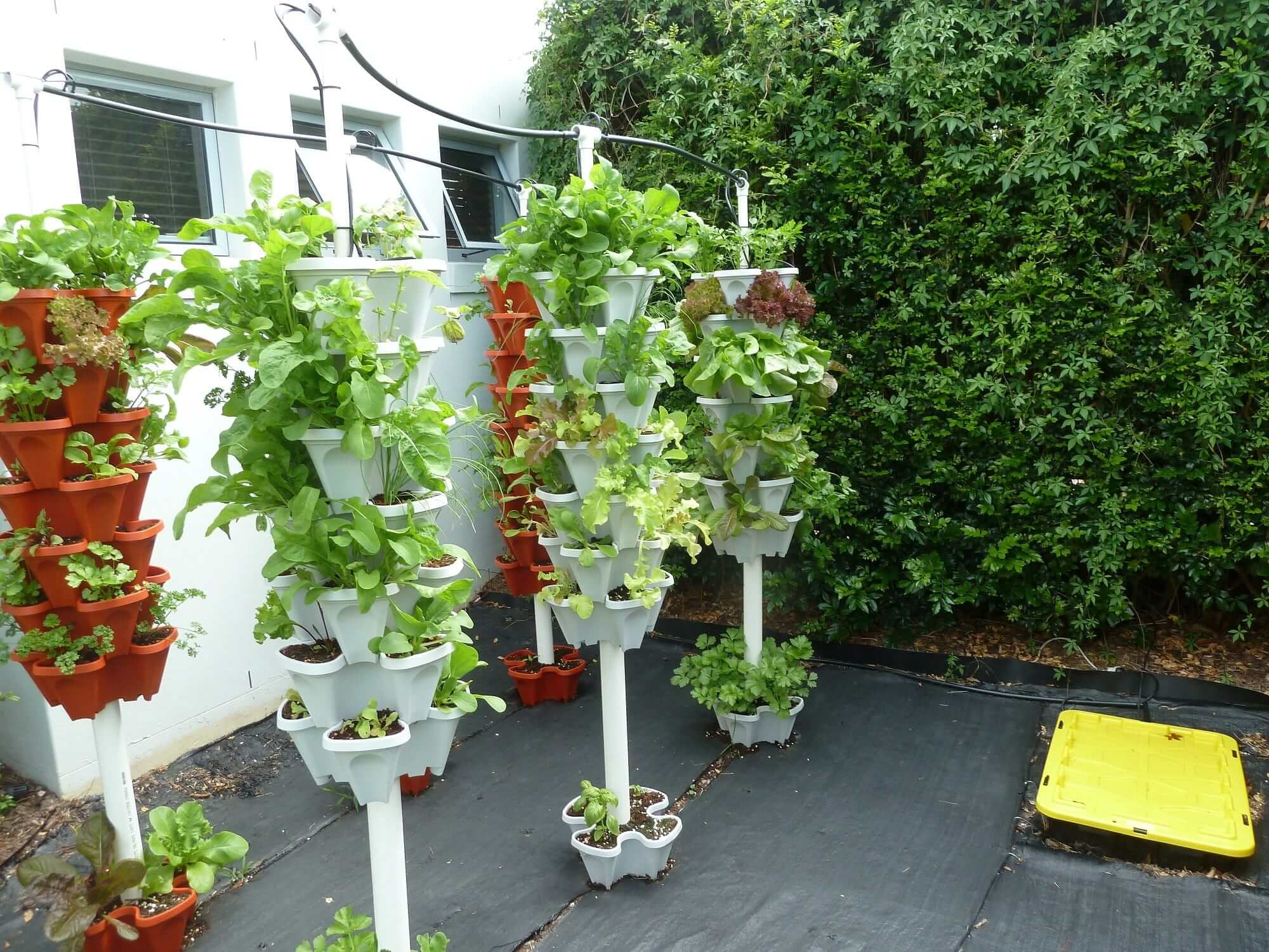 12 Relevant Information About Hydroponic Gardening
