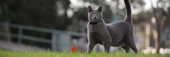 Cat-GPT